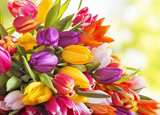 Colorful bouquet of spring tulips