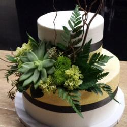 2 - Tiered Cake with Succulents and Greenery